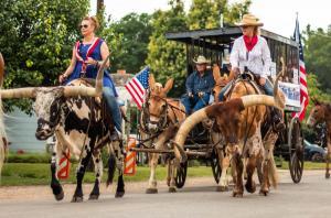 Riding longhorns